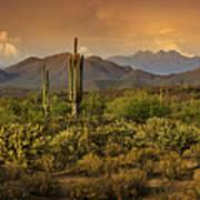 The Beauty Of The Sonoran Desert  Art Print