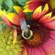The Bee Keeper Art Print