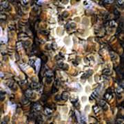 The Bees Hive It Art Print