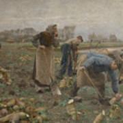The Beet Harvest Art Print
