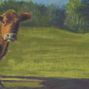 The Belted Cow Art Print
