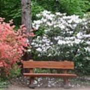 The Bench Of Peace And Pleasure Art Print