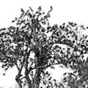 The Birds And The Tree Art Print