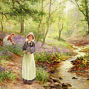 The Bluebell Glade Art Print by Ernest Walbourn