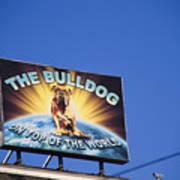 The Bulldog On Top Of The World Art Print