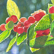 The Bush With The Red Berries Art Print