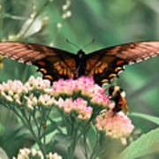 The Butterfly And The Bumblebee Art Print
