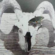 The Butterfly And The Skull Art Print