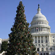 The Capitol Christmas Tree Is Decorated Art Print