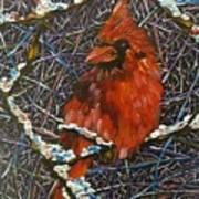The Cardinal  Art Print