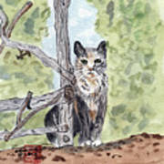 The Cat At The Fence Art Print