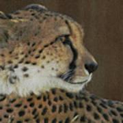 The Cheetah 2 Art Print
