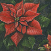 The Christmas Flower Art Print by Jeff Brimley