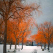 The Colours Of Winter Art Print