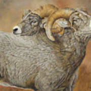 The Conquest - Bighorn Sheep Art Print