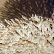 The Coral Art Print