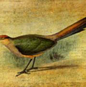 The Cuckoo's Note Art Print