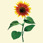 The Dancing Sunflower Art Print