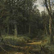 The Dark Wood Art Print