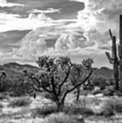 The Desert Speaks Art Print