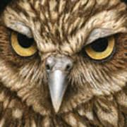 The Dubious Owl Art Print