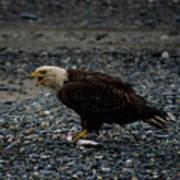 The Eagle And Its Prey Art Print