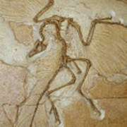 The Earliest Bird, Archaeopteryx Print by Jason Edwards