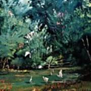 The Egrets Have Landed Art Print