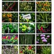 The Essential Thai Garden II Art Print