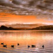 The Evening Geese Art Print