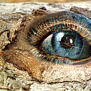 The Eye Of Nature 1 Art Print