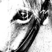 The Eye Of The Horse Art Print