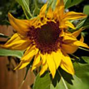 The First Sunflower Art Print