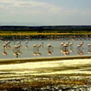 The Flamingoes Art Print