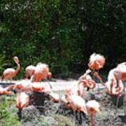 The Flamingos Art Print