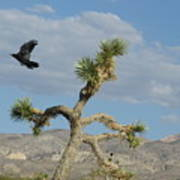 The Flight Of Raven. Lucerne Valley. Art Print
