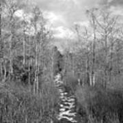 The Florida Trail Art Print