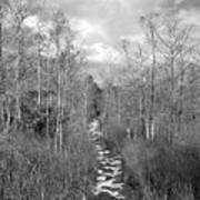 The Florida Trail Art Print
