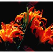 The Flower Of Fire Art Print