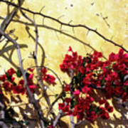 The Flowers Of Carmel 2 Art Print