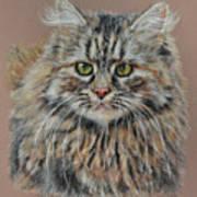 The Fluffy Feline Art Print by Terry Kirkland Cook