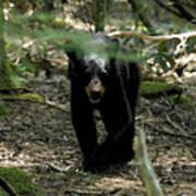 The Forest Bear Art Print