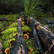 The Forest Floor Art Print