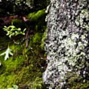 The Forest Floor Bluestone State Park West Virginia Art Print