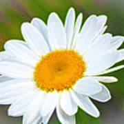 The Friendliest Flower Art Print