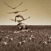 The Gathering - Sandhill Cranes Art Print