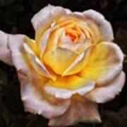The Glowing Rose Art Print