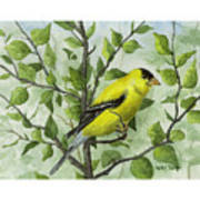 The Goldfinch Art Print