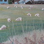 The Grazing Sheep Art Print