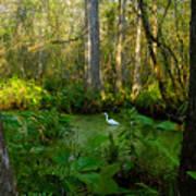 The Great Corkscrew Swamp Art Print